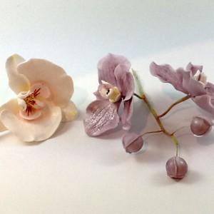 Seminar orchideen